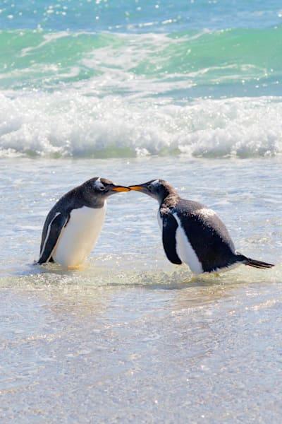 penguins-004