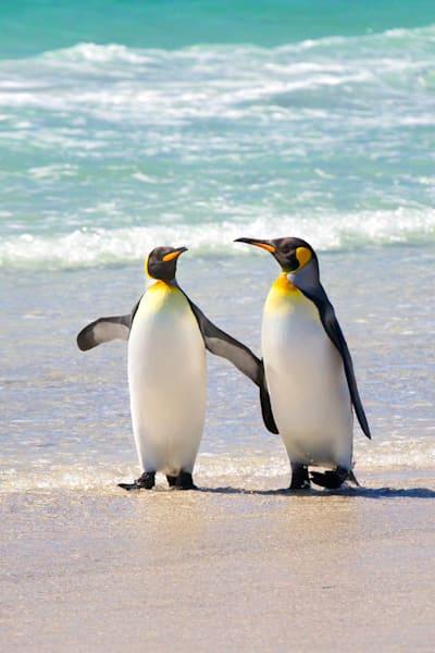 penguins-006