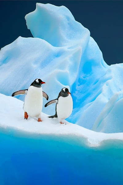 Penguins 007 Photography Art | Cheng Yan Studio
