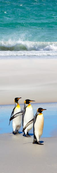 Penguins 011 Photography Art | Cheng Yan Studio
