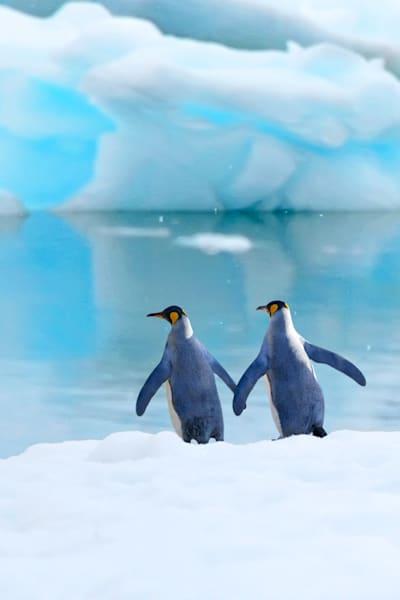 penguins-009