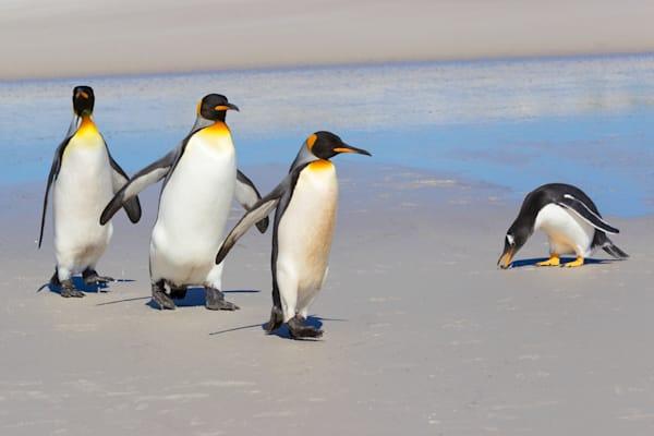 Penguins 012 Photography Art | Cheng Yan Studio