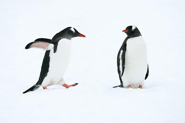 Penguins 015 Photography Art | Cheng Yan Studio