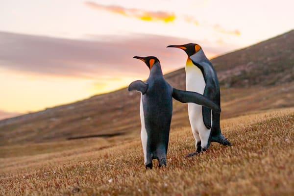 Penguins 016 Photography Art | Cheng Yan Studio