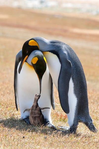 Penguins 014 Photography Art | Cheng Yan Studio