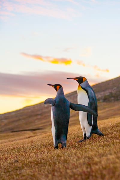 Penguins 021 Photography Art | Cheng Yan Studio