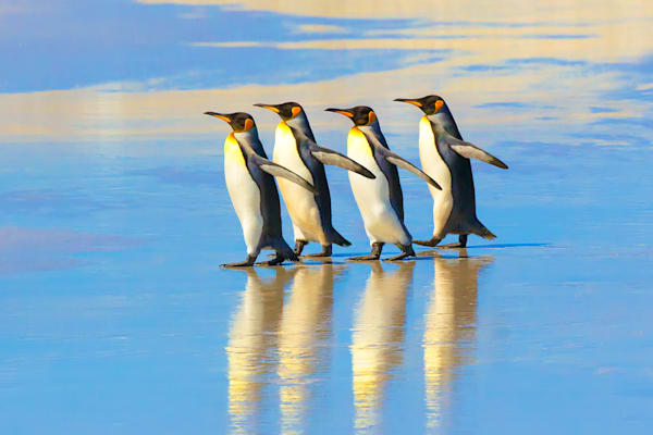 penguins-022
