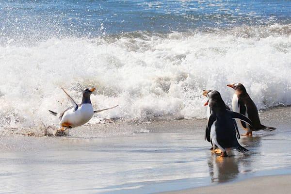 Penguins 023 Photography Art | Cheng Yan Studio