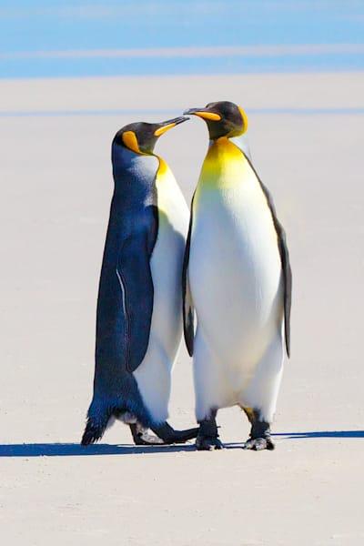 Penguins 028 Photography Art | Cheng Yan Studio