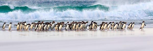 Penguins 031 Photography Art | Cheng Yan Studio