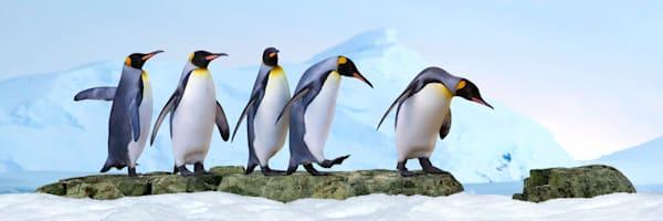 Penguins 032 Photography Art | Cheng Yan Studio