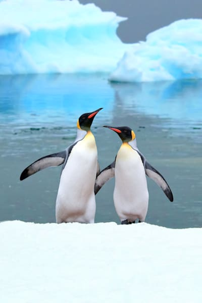 Penguins 034 Photography Art | Cheng Yan Studio