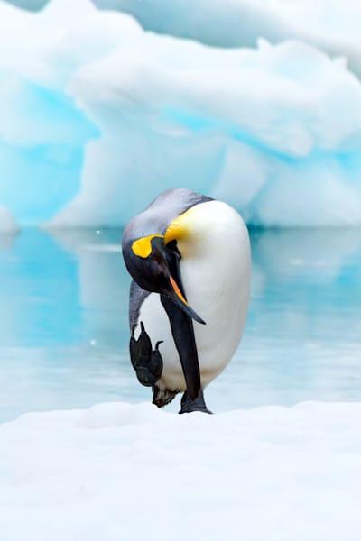 Penguins 033 Photography Art | Cheng Yan Studio