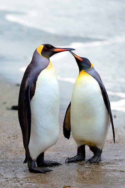 Penguins 029 Photography Art | Cheng Yan Studio