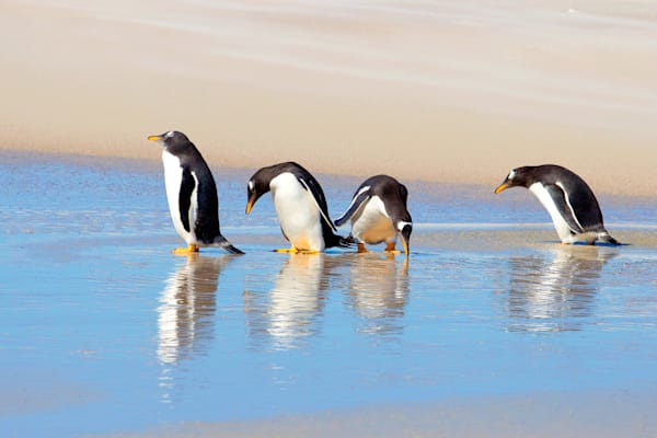Penguins 036 Photography Art | Cheng Yan Studio