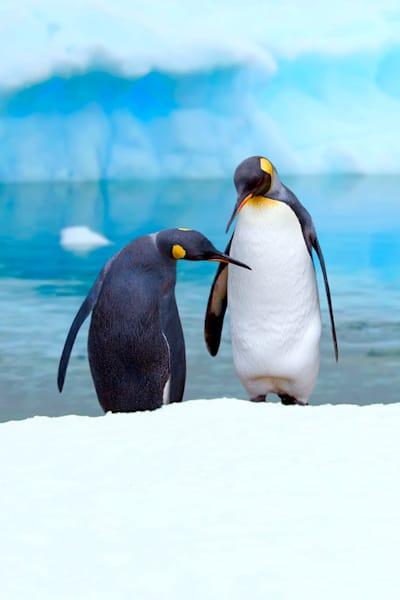 Penguins 039 Photography Art | Cheng Yan Studio