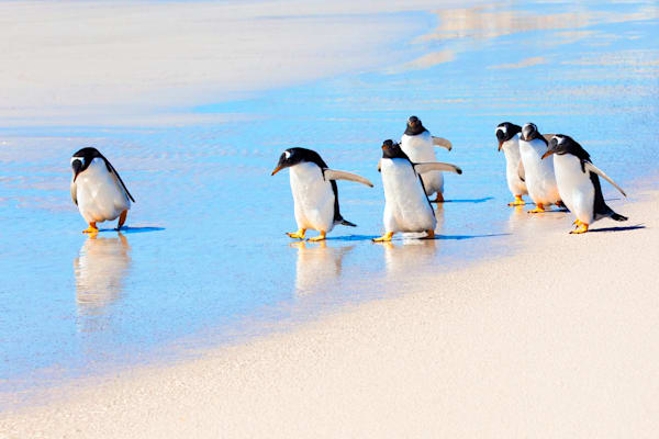 penguins-038