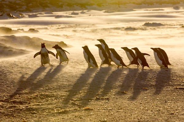 Penguins 040 Photography Art | Cheng Yan Studio
