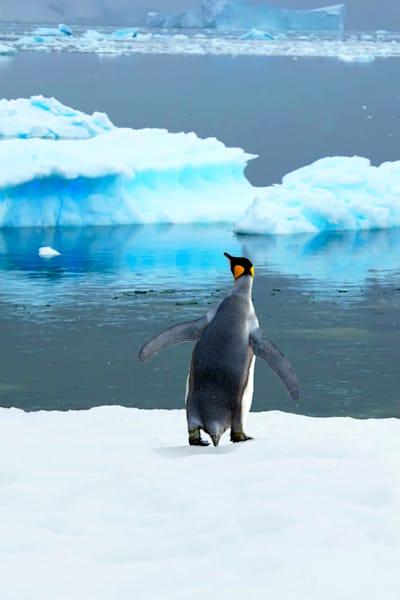 Penguins 041 Photography Art   Cheng Yan Studio
