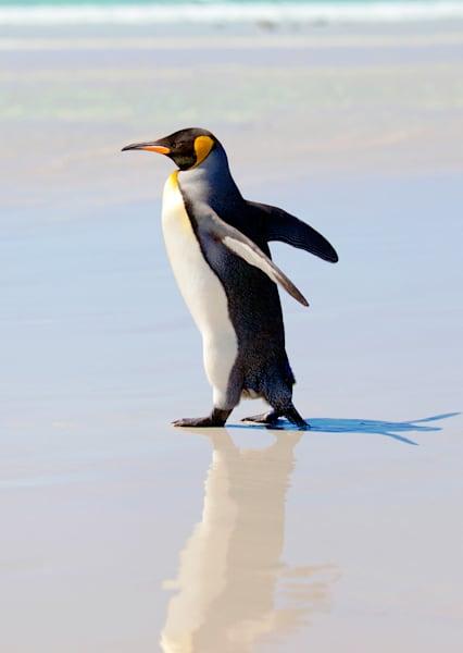 penguins-043