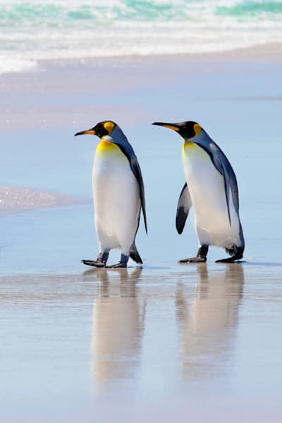 penguins-045