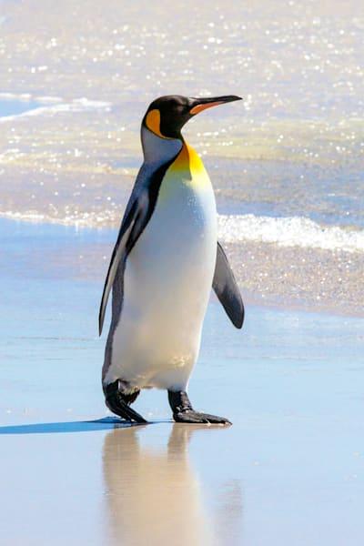 penguins-049