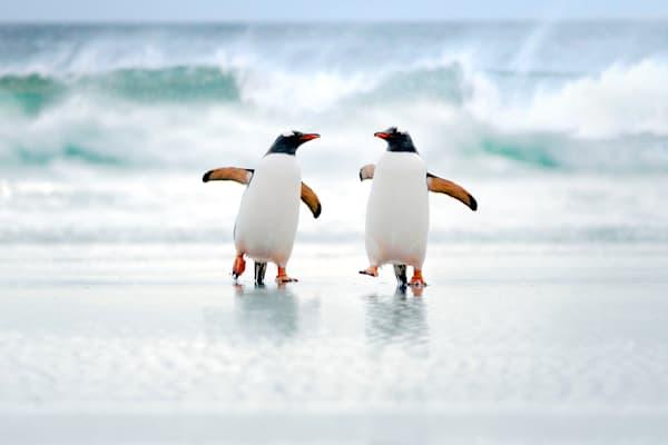 penguins-054