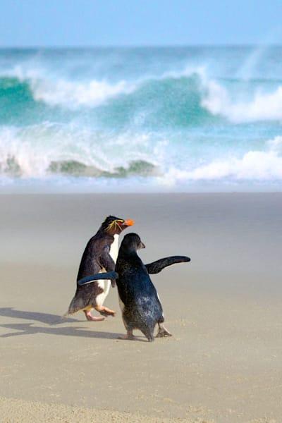 penguins-052