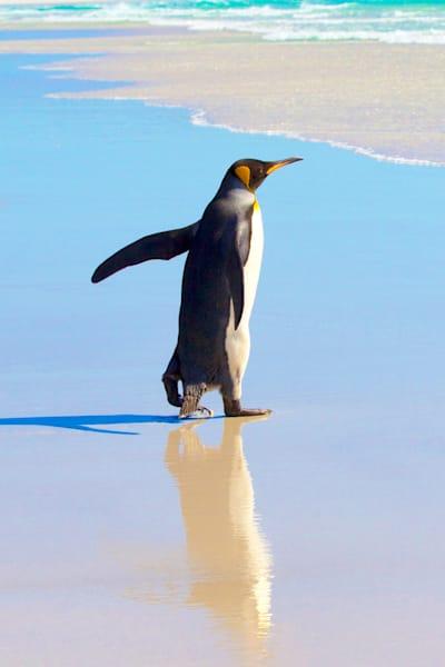 penguins-053