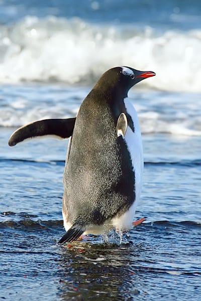 penguins-051
