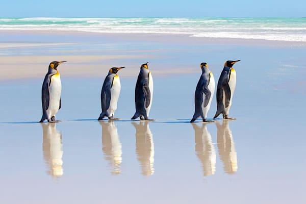 penguins-048
