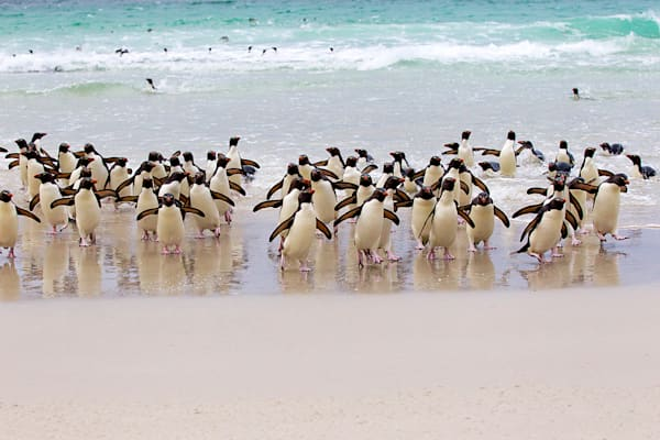 penguins-055