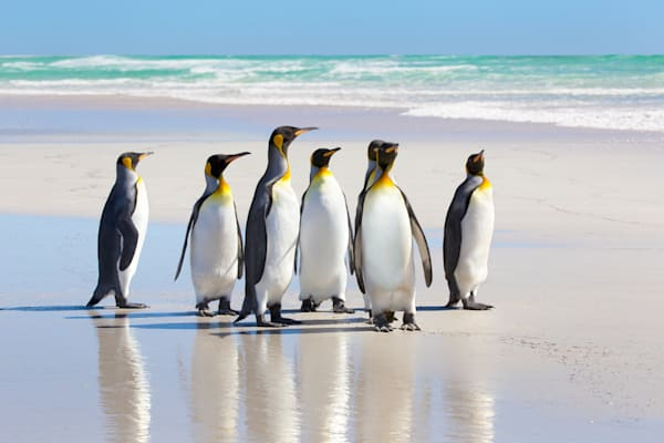 penguins-046
