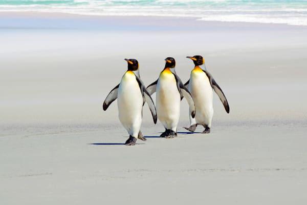 penguins-059