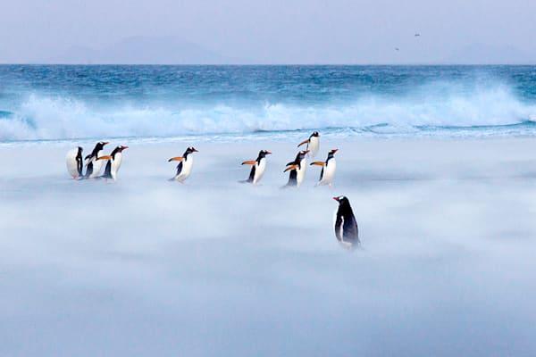 penguins-057