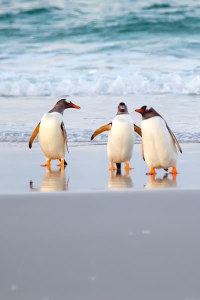 penguins-058