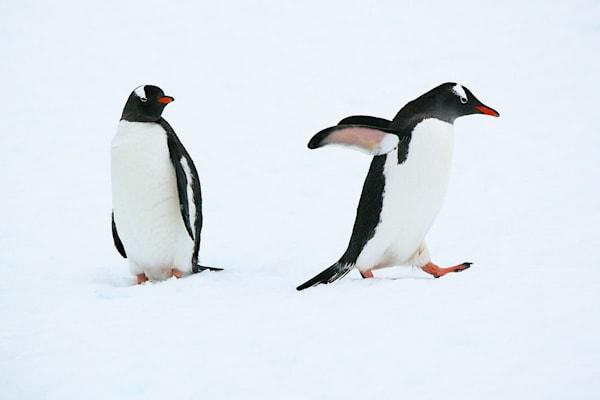 penguins-063