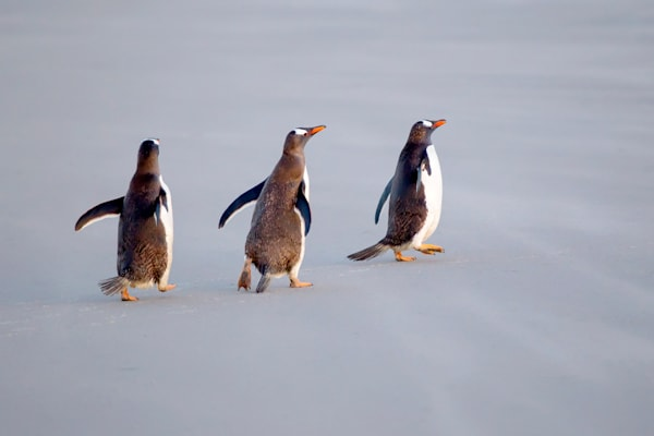 penguins-064