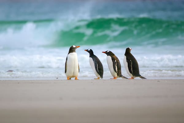Penguins 066 Photography Art | Cheng Yan Studio