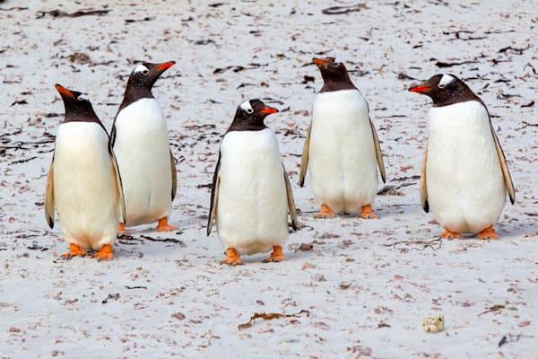 Penguins 071 Photography Art | Cheng Yan Studio