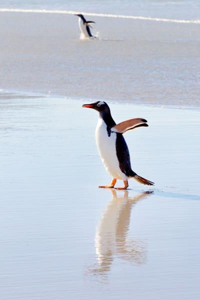 Penguins 074 Photography Art | Cheng Yan Studio