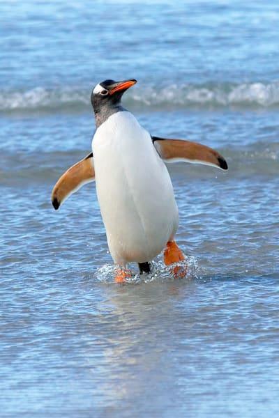 penguins-073