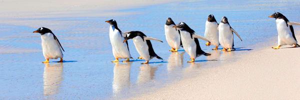 Penguins 081 Photography Art | Cheng Yan Studio