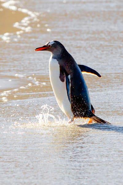 penguins-075