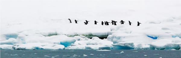 Penguins 083 Photography Art | Cheng Yan Studio