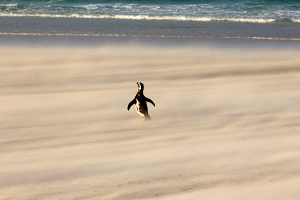 penguins-079