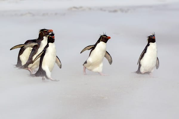 Penguins 085 Photography Art | Cheng Yan Studio