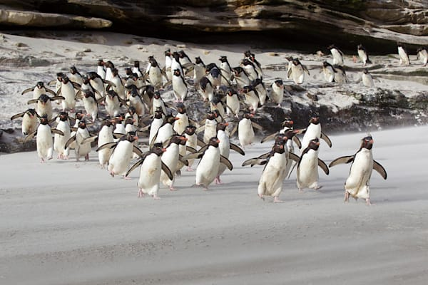 penguins-086