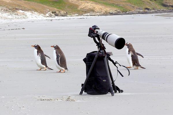 penguins-093