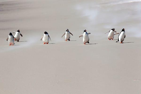 penguins-097